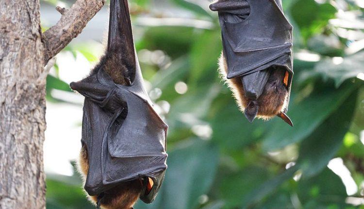 Morcegos às Claras no Pavilhão do Conhecimento